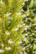 Flourish plant detail Stock Photos
