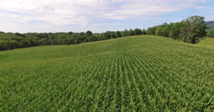 4K Aerial of a corn field on a farm, flying backwards Stock Footage