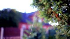 Spider web garden closeup vintage colour Stock Footage