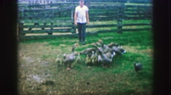 1969: Hungry geese begging for food with young cute geesling offspring. AMES, Stock Footage