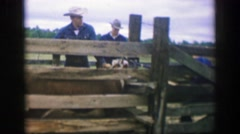 1969: Ranch cowboy working cattle stockade animal husbandry care. AMES, IOWA Stock Footage