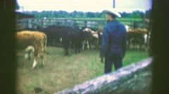 1969: Ranch hand watching cattle pens stockyards cows calm but nervous.  AMES, Stock Footage