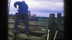 1969: Cowboy hot iron branding cattle locked in stockade fence jean jacket.  Stock Footage