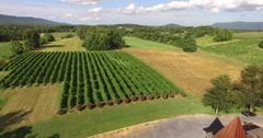 4K Aerial of a vineyard, flying backwards Stock Footage