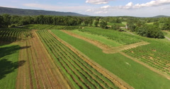 4K Aerial of a vineyard, turning Stock Footage