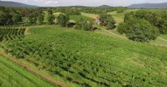 4K Aerial of a vineyard, flying forwards Stock Footage