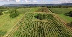 4K Aerial of a vineyard and firld of grapes, descending, tilt up Stock Footage
