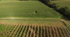 4K Aerial of a vineyard and firld of grapes, flying backwards, tilt up Stock Footage