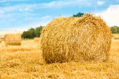 Large round straw bale Stock Photos