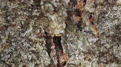 Ants on tree bark in forest Stock Footage