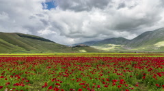 Timelapse of the plain of Castelluccio of Norcia. Stock Footage