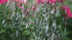 Water drops falling on pink flower Stock Footage