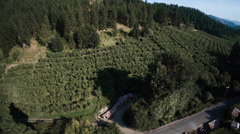 Aerial: Tracking Sideways Over Road and Trees through Orchard Farm Stock Footage
