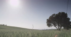 Sunny water meadow Stock Footage