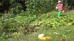 Man reap fresh ripe vegetable zuccini and pumpkin in garden. 4K Stock Footage