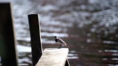 Bird near the river in wildlife Stock Footage