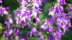 Wildflowers in the wind. Sunny countryfield background Stock Footage