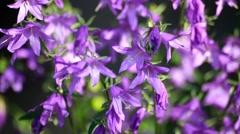 Shot of Purple Wildflowers field Stock Footage