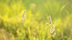 Wildflowers field Stock Footage