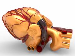 Model of artificial human heart 3d rendering Stock Illustration