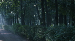 Misty walkway in the park, forest. Morning, Slanting rays of the rising sun Stock Footage