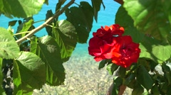 Mediterranean flora against the sea water Stock Footage