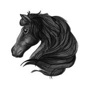 Black stallion horse head sketch Stock Illustration