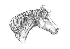Speedy racehorse of american quarter breed sketch Stock Illustration