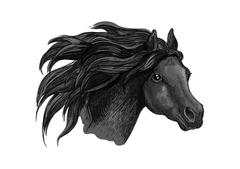 Black mustang horse sketch portrait Stock Illustration