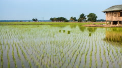 Dusk time lapse of an abandoned house in the middle of a secluded paddy field. P Stock Footage
