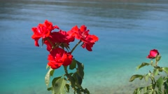 Zoom out roses against the sea front Stock Footage