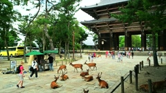 Nara - Tourist and Sika deers in front of Todai-ji Temple entrance gate. Stock Footage