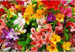 Lilium orientale Almeria Stock Photos