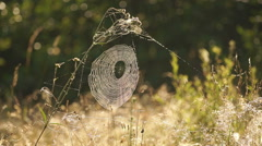 Spiderweb in the grass with dew glistens in the morning sun. Stock Footage