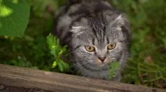 Lop-eared cat outside outside Stock Footage