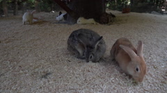 Rabbits playing in a playpen at a petting zoo Stock Footage
