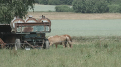 A Herd of Horses on a Paddock eating and walking in 4K Stock Footage