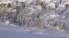 Frozen grass near a stream in the winter forest. Stock Footage