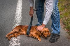 Man holds a leather belt in hand and he wants to hit the dog - dog abuse Stock Photos