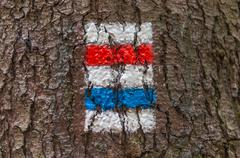 Colorful tourist sign or mark on tree for hiking tourism in a forest Kuvituskuvat