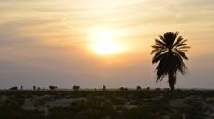 Timelapse of Desert Sunset Stock Footage