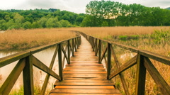 Wooden path and cane thicket on a pond Stock Footage