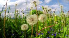 Meadow on the Luxembourg countryside Stock Footage