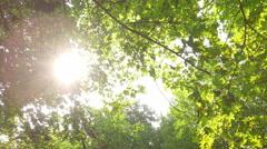 Sun rays through the trees Stock Footage