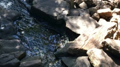 Three otters running along rocks and through small stream, handheld.  Stock Footage
