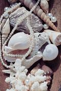 A lot of sea shells and perls in art mess close up Stock Photos