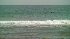 Dolphin pod swimming in waves Stock Footage