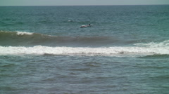 Two dolphins swim side by side Stock Footage