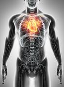 3D illustration of Heart, medical concept. Stock Illustration