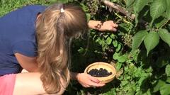 Worker woman girl in shorts gather harvest fresh black berries ripen on farm Stock Footage